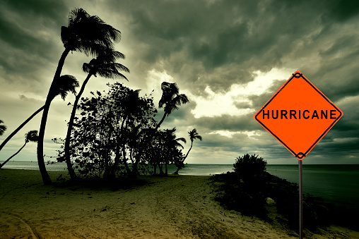 hurricane sign with palm trees blowing from strong wind